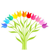 Bouqet of tulips Stock Photo