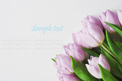 Bouqet tulips and gift on the white background Royalty Free Stock Photos
