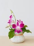 Bouqet van orchideebloemen Stock Afbeelding