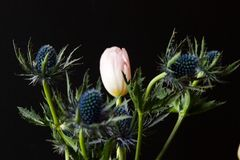 Bouque of Blue Thistle and pink tulips over black Royalty Free Stock Photography