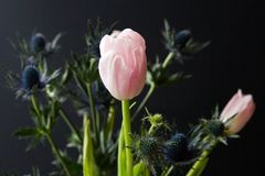 Bouque of Blue Thistle and pink tulips over black Royalty Free Stock Photo