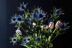 Bouque of Blue Thistle and pink tulips over black Royalty Free Stock Image