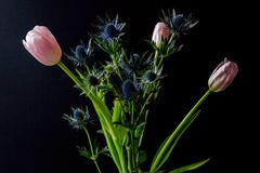 Bouque of Blue Thistle and pink tulips over black Stock Photography