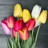 Bouque del tulipano Fotografia Stock