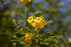 Bouque kwiatów kolory żółci zdjęcie stock