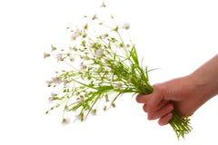 Bouquet à disposition Images libres de droits