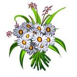 Bouquet élégant des wildflowers blancs Photo stock