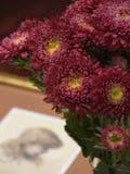 Bouquet Royalty Free Stock Photos