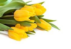 Bouquet. Stock Photos