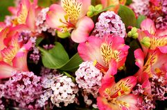 Bouquet. Of beautiful multicolored flowers Royalty Free Stock Photo