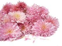 Bouquet Image stock