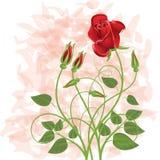 Bouquet illustration libre de droits