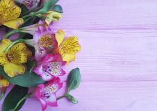 Bouquet of alstroemeria bright on a pink wooden still holiday frame. Bouquet of alstroemeria on a pink wooden birthday holiday still bright frame Royalty Free Stock Photography