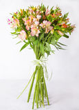 Bouquet alstroemeria on a light gray background. Still life with colorful alstroemeria. Fresh alstroemeria. Place for text. Flower. Place for text. Flower Stock Photos