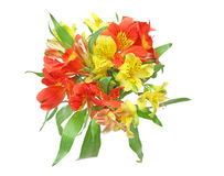 Bouquet of alstroemeria Royalty Free Stock Image