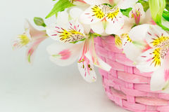 Bouquet of alstroemeria  in wicker basket Stock Images