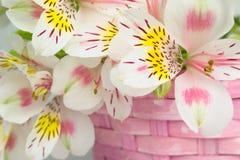 Bouquet of alstroemeria  in wicker basket Stock Photo
