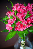 Bouquet of alstromeria. Bouquet of bright pink flowers of alstromeria (Peruvian Lily Stock Photography