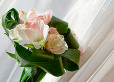 Bouquet of Amaryllis Royalty Free Stock Images