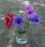 Bouquet of anemone flowers in a vase. On a wooden table royalty free stock photography