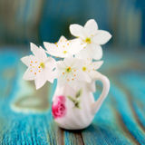 Bouquet of Anemone, windflower in jug Stock Image