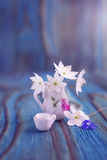 Bouquet of Anemone, windflower in miniature, diminutive jug Royalty Free Stock Photos