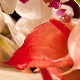 Bouquet of anthurium and orchids Stock Photography