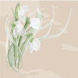 Bouquet of art snowdrops Stock Photos