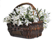 Bouquet of artificial snowdrops Stock Photography