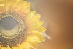 Bouquet of artificial sunflower. Yellow Sunflower Vintage Style Royalty Free Stock Images