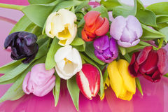 Bouquet of assorted Dutch Tulips Stock Photos