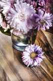 Bouquet of aster in blossom Royalty Free Stock Image