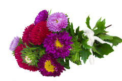 Bouquet of aster flowers Stock Photo
