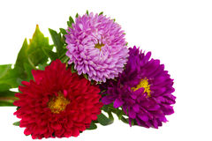 Bouquet of aster flowers stock photography