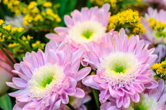 Bouquet of aster flowers Royalty Free Stock Photo