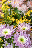 Bouquet of aster flowers Stock Images