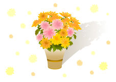 Bouquet of asters Royalty Free Stock Photos