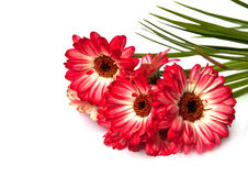 Bouquet of asters. Stock Images