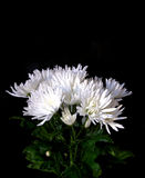 Bouquet of asters royalty free stock images