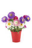Bouquet of asters in a bucket Stock Photos