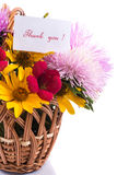 Bouquet of asters Stock Images