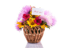 Bouquet of asters Royalty Free Stock Photography