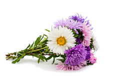 A bouquet of asters Stock Photos