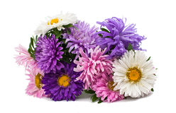 Bouquet of asters Stock Photo