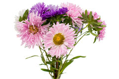 A bouquet of asters Royalty Free Stock Photography