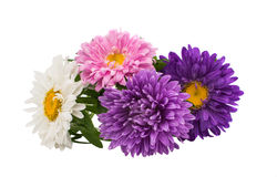 A bouquet of asters Royalty Free Stock Image