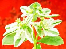 Bouquet au-dessus de fond rouge Image stock
