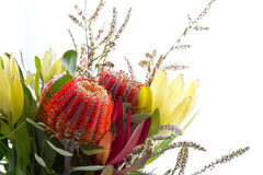 Bouquet of Australian Native flowers against white background Royalty Free Stock Photo