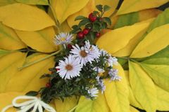 The autumn flowers. This is a bouquet of autumn flowers Royalty Free Stock Photos