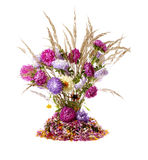 Bouquet of autumn flowers Stock Photo